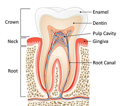 Root Canal Procedure in Bronx